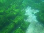 Sea Grass Plains